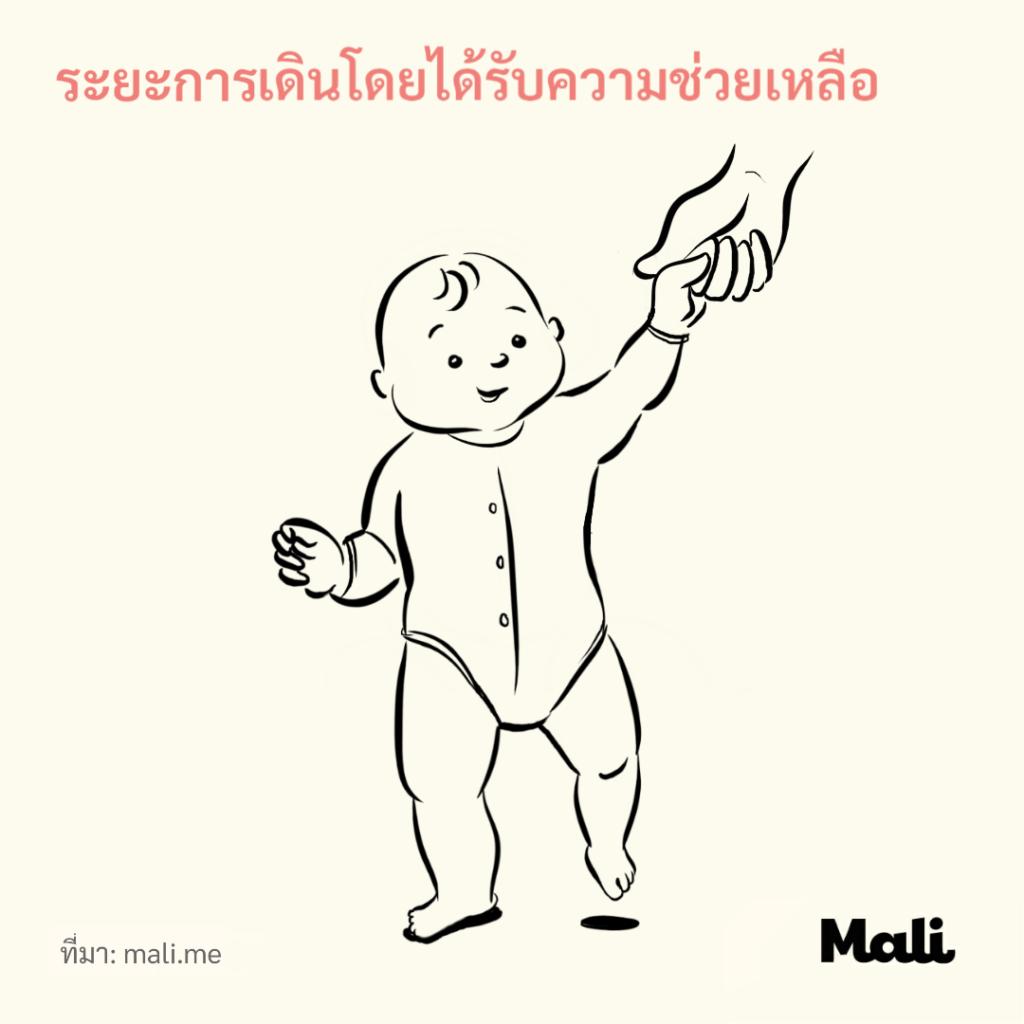8 ขั้นตอนการเดินของทารก_ระยะการเดินโดยได้รับความช่วยเหลือ by Mali