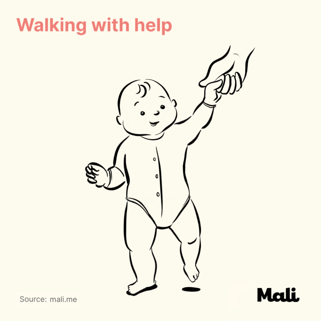 8 stages of baby walking_Walking with help by Mali