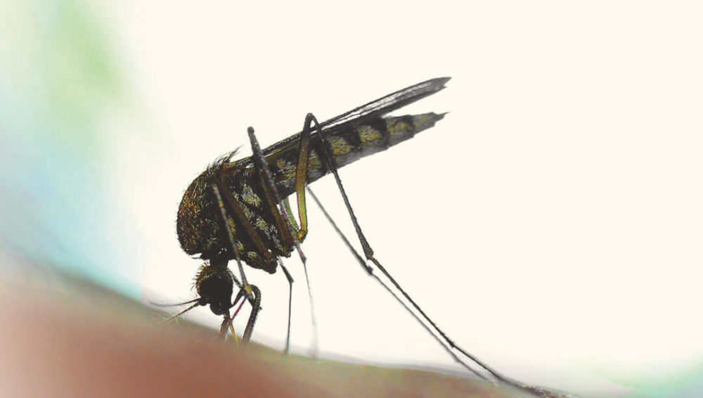 Zika Virus During Pregnancy
