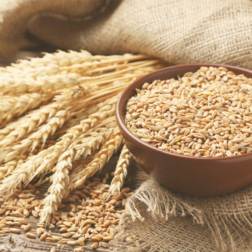 What you should know about wheat and gluten allergy