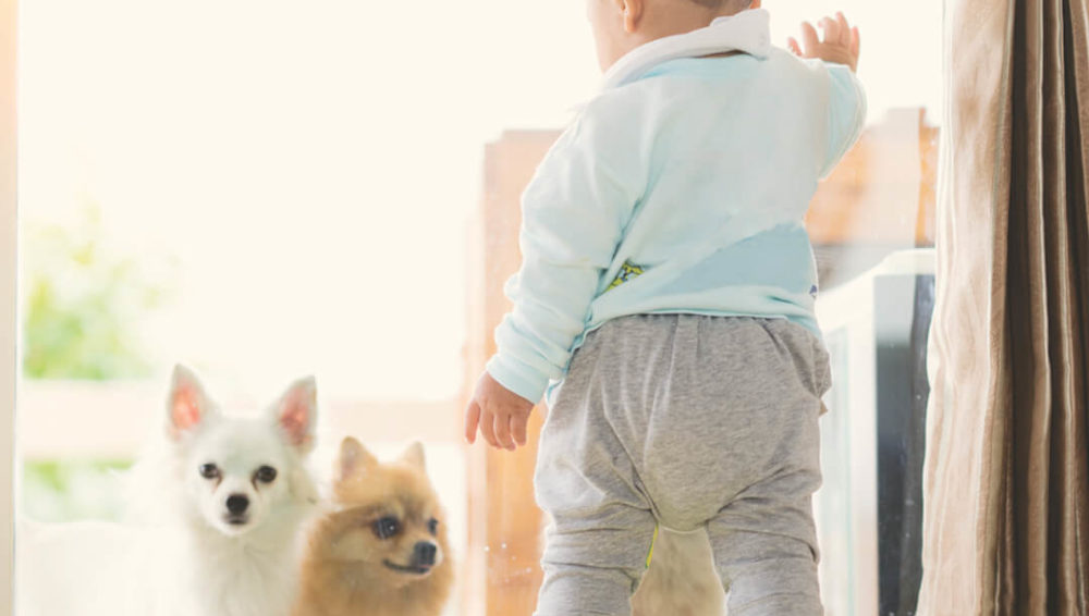 What to do with pets while pregnant?